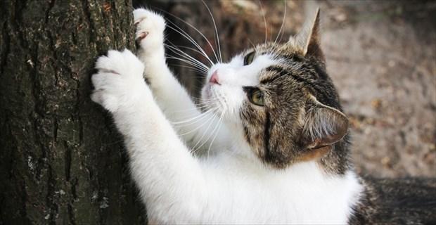 画像 野良猫がおもむろに爪とぎを始めた場所は、なんと…アカーン(笑)!!