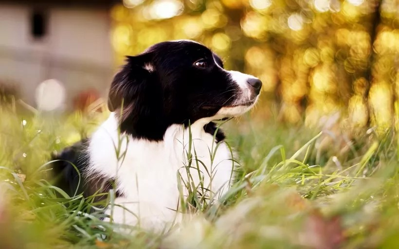 Really Cute Dog Wallpaper 10 Best Border Collie Dog Names
