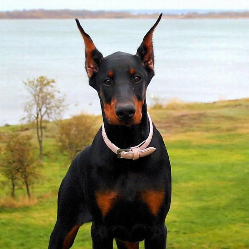 Large Of Black Dog Names