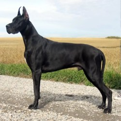 Small Of Names For Black Dogs