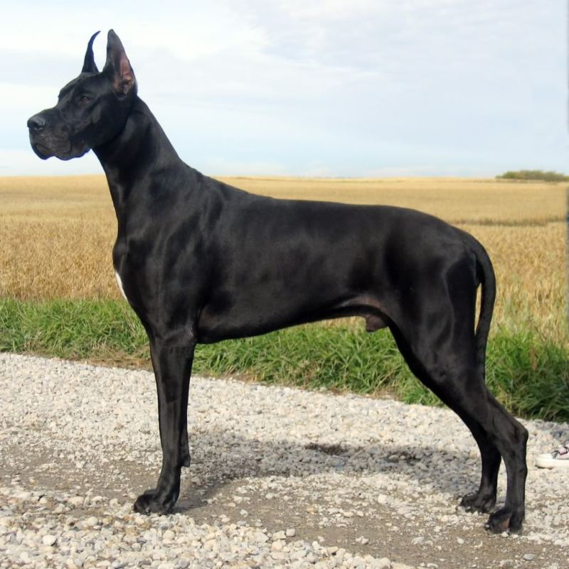 Large Of Names For Black Dogs