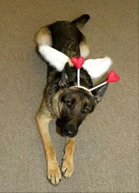 19 Costumes That Prove German Shepherds Always Win At