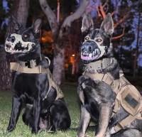 19 Costumes That Prove German Shepherds Always Win At ...