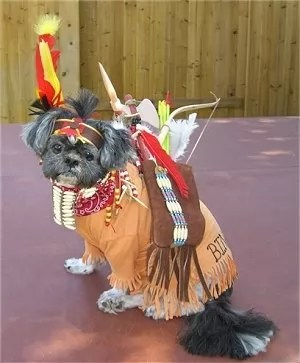 17 Costumes That Prove Shih Tzus Always Win At Halloween