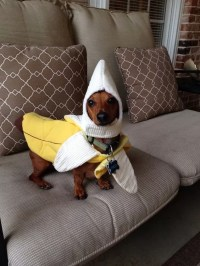Weiner Dog Costumes Pictures to Pin on Pinterest - PinsDaddy