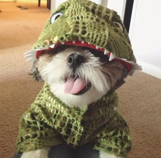 Cute Yorkie Wallpaper 17 Costumes That Prove Shih Tzus Always Win At Halloween