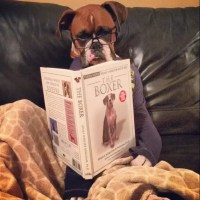 18 Things That Make Boxer Dog Happy
