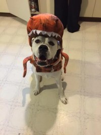 12 Costumes That Prove Boxer Dogs Always Win At Halloween