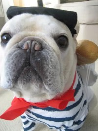 Bulldog Costumes For Dogs