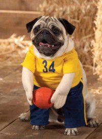 24 Pug Halloween Costumes That Are So Cute We Cant Even