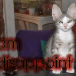 20130716-disappoint-kitty