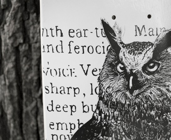 owl_04