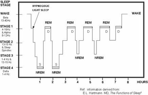 Diagram Of Sleep Cycles