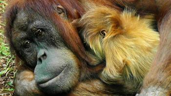 Tierreich-Beitragsbild