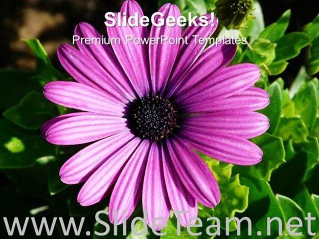 IMAGE OF GERBERA FLOWER WITH GREEN LEAVES POWERPOINT TEMPLATE