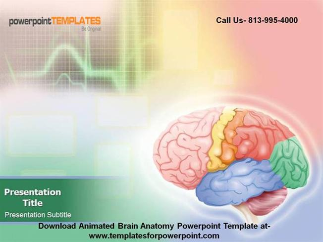 Animated Brain Anatomy Powerpoint TemplateauthorSTREAM