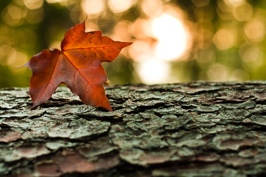 3d Falling Leaves Animated Wallpaper Free Download 3d Falling Leaves Screensaver Free Animated Screensaver