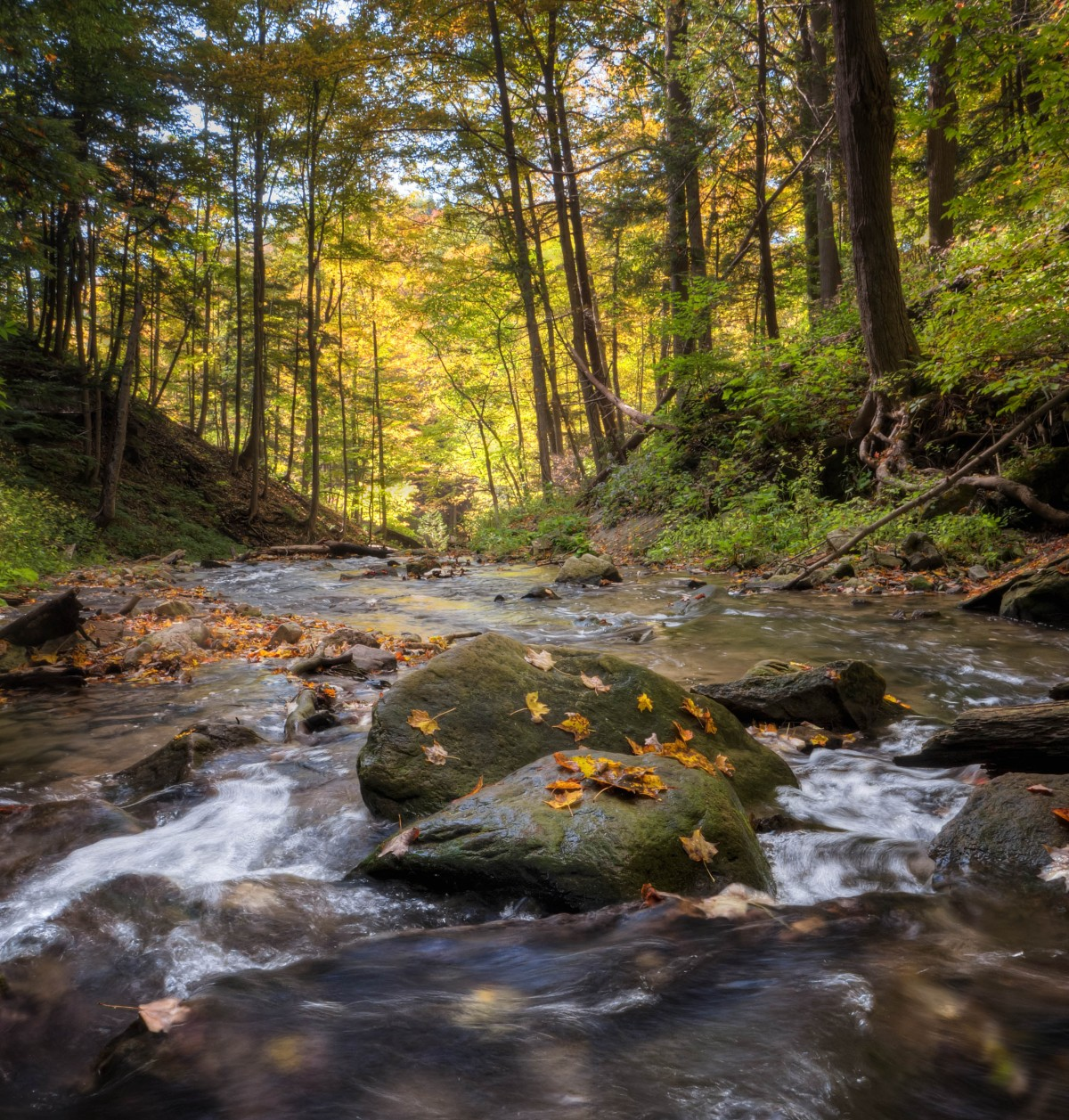 Colorful Fall Scene Wallpaper Free Images Landscape Tree Nature Forest Rock Creek