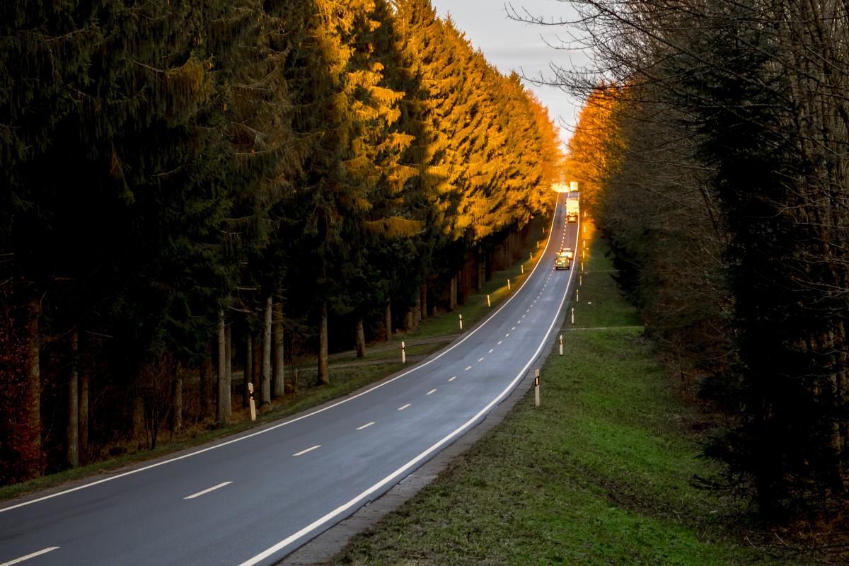 Yellow Cute Wallpaper Fotos Gratis Paisaje Naturaleza Bosque La Carretera