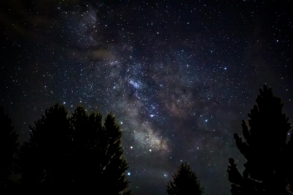 Orion Nebula Hd Wallpaper Images Gratuites Arbre La Nature Silhouette Ciel