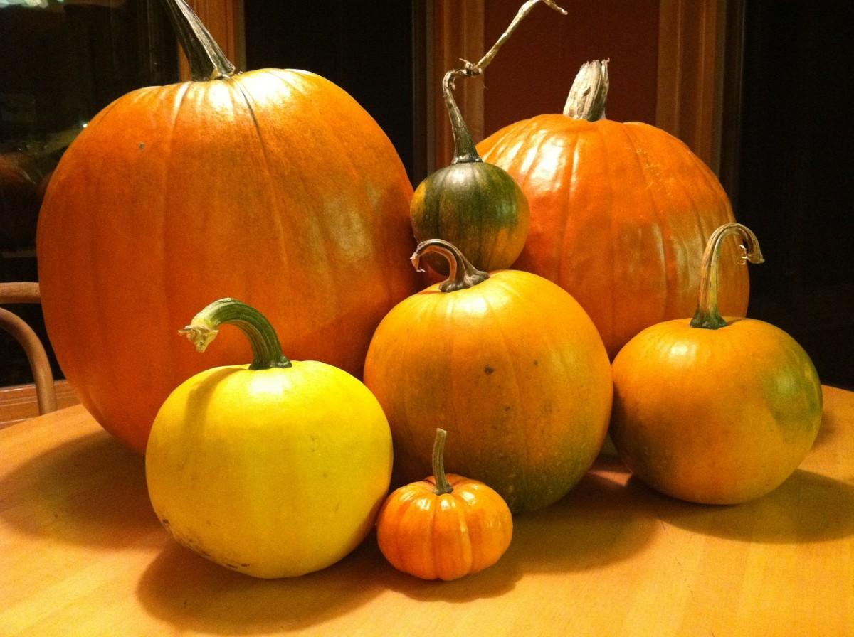 Fall Pumpkin Iphone Wallpaper Free Images Nature Farm Stem Fall Orange Food