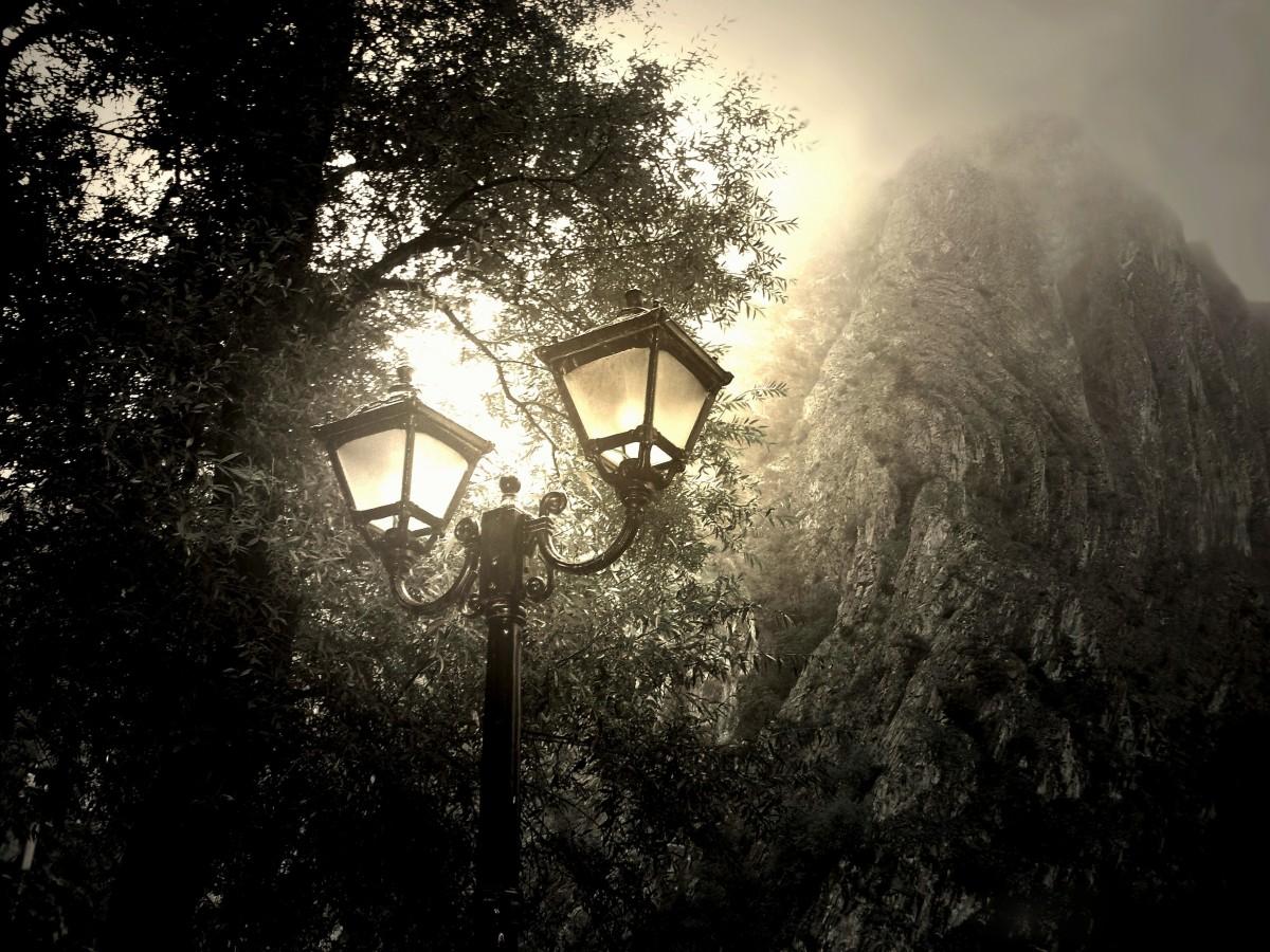 Fall Leaves Wallpaper Windows 7 Free Images Landscape Forest Light Girl Night