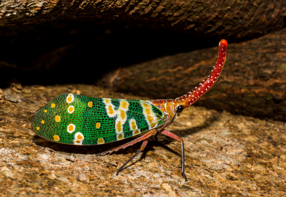 Nature Animal Wallpaper Hd Free Images Nature Leaf Wildlife Green Red Insect