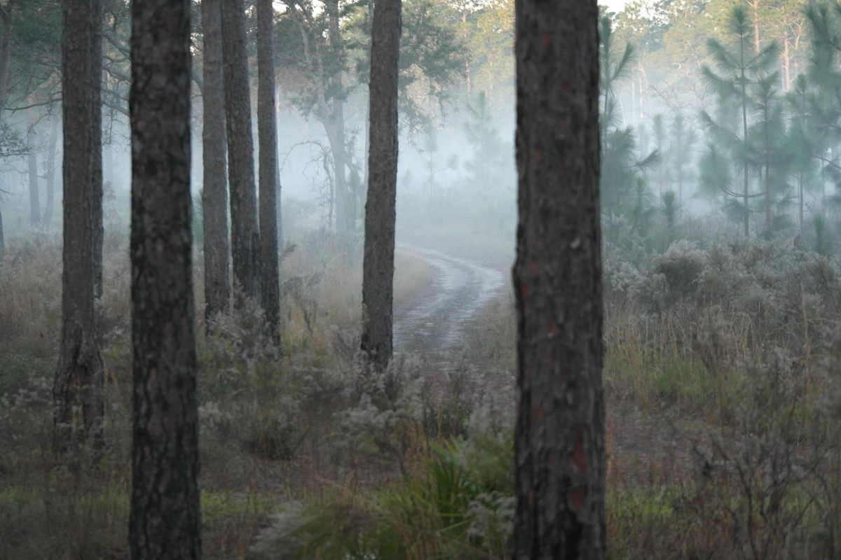 Fall Wood Wallpaper Free Images Tree Nature Fog Mist Sunlight Morning