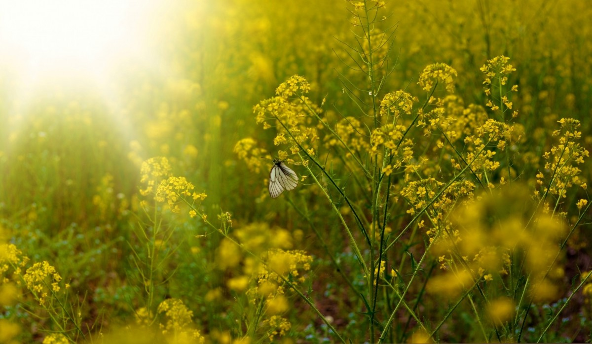 Pattern Wallpaper Hd Free Images Nature Sky Field Meadow Prairie