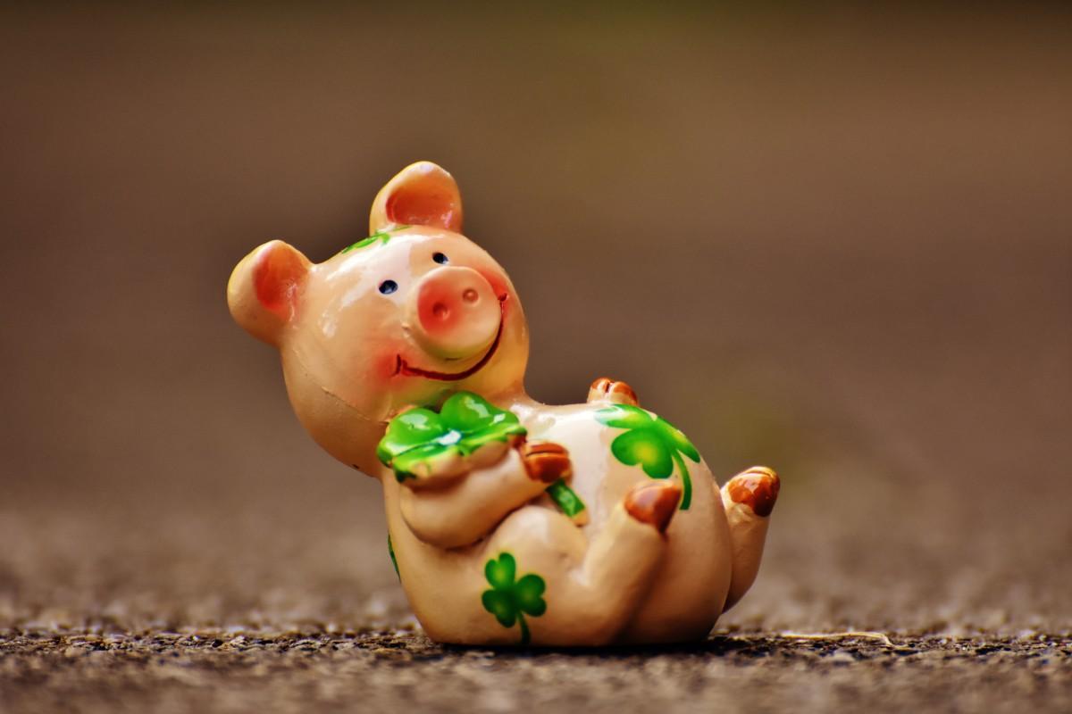 Whatsapp Cute Wallpaper Images รูปภาพ สัตว์ น่ารัก อาหาร สีชมพู ขนม ของเล่น