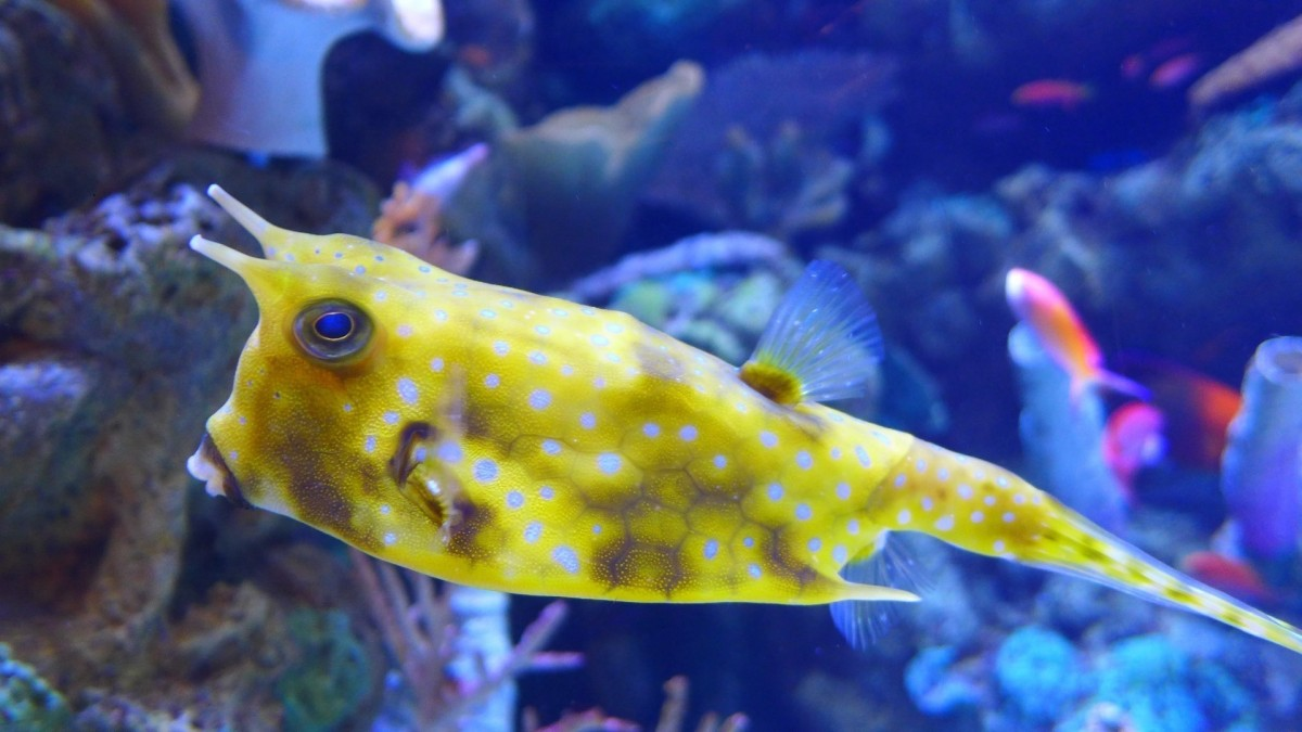 Fish Tank 3d Live Wallpaper For Pc Free Images Sea Water Ocean Animal Wildlife