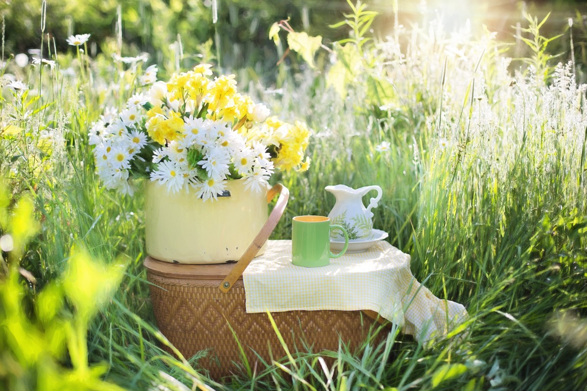 Garden Coffee La Rochelle Free Images Lawn Meadow Play Flower Summer Green