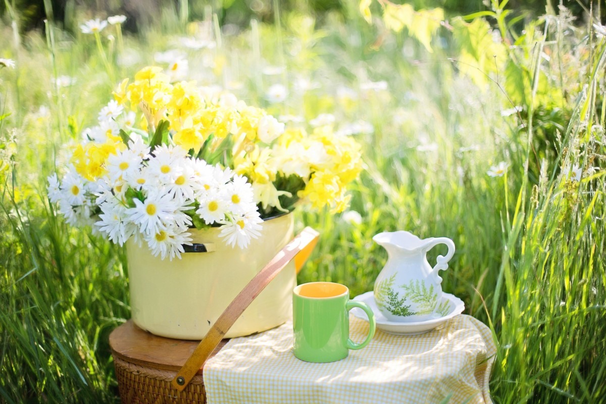 Coffee Garden Jobs Free Images Lawn Meadow Play Flower Summer Green