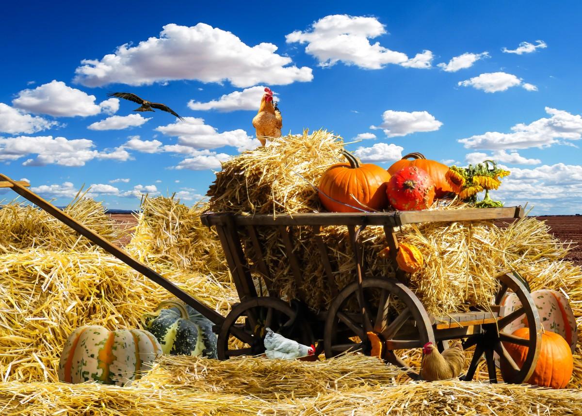 Free Fall Harvest Desktop Wallpaper Free Images Sky Hay Field Cart Flower Harvest Crop