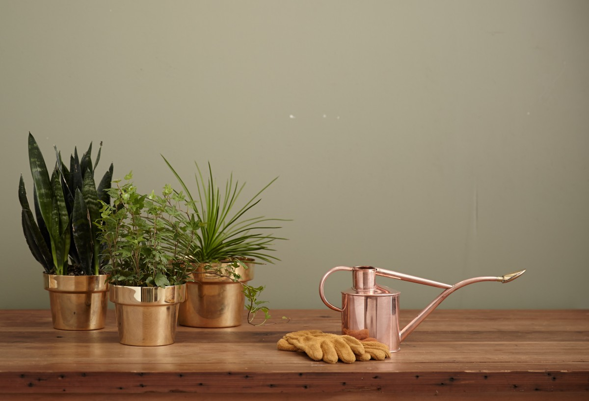 Pot Planten Free Images : Desk, Table, Plant, Wood, Flower, Green