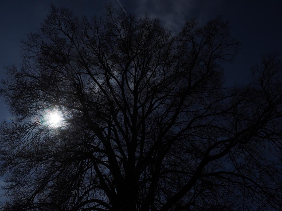 Black Crown Wallpaper Free Images Tree Nature Winter Light Bokeh Fog