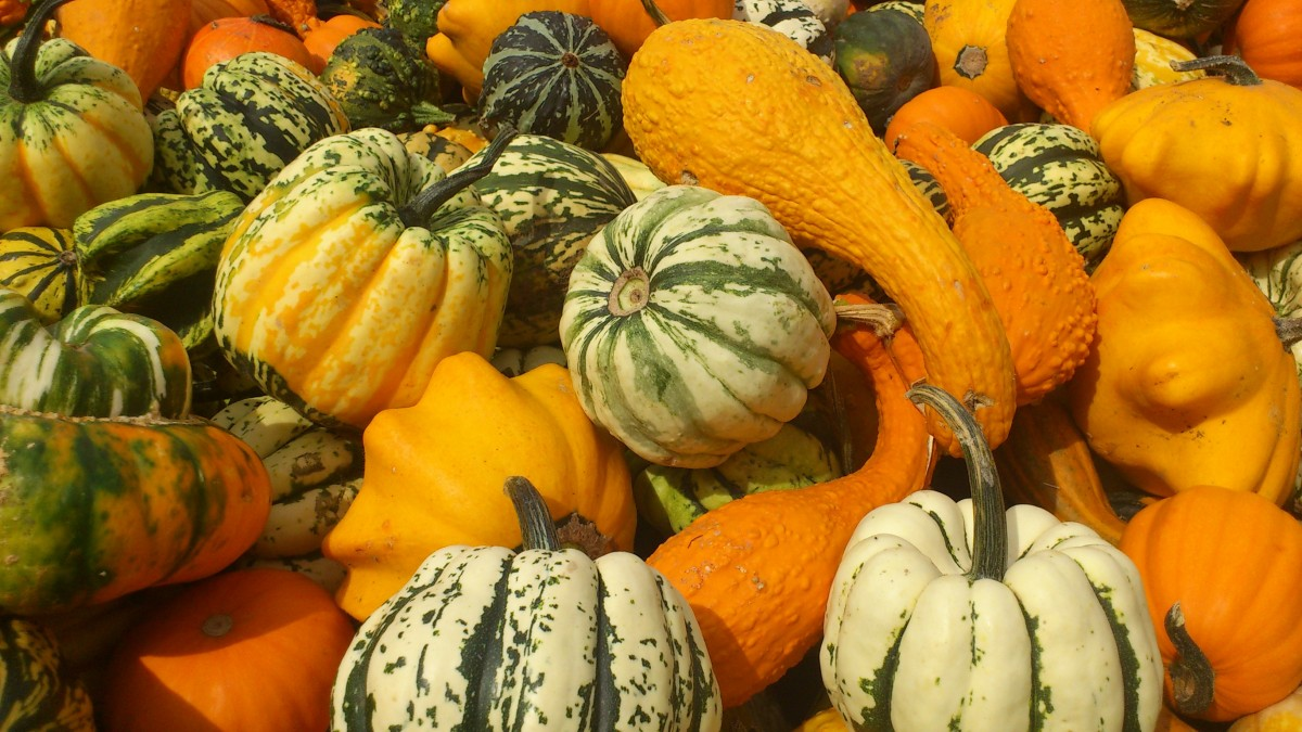 Fall Wallpaper With Pumpkins Free Images Fruit Orange Food Harvest Produce