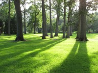 Free Images : tree, nature, forest, grass, lawn, meadow ...