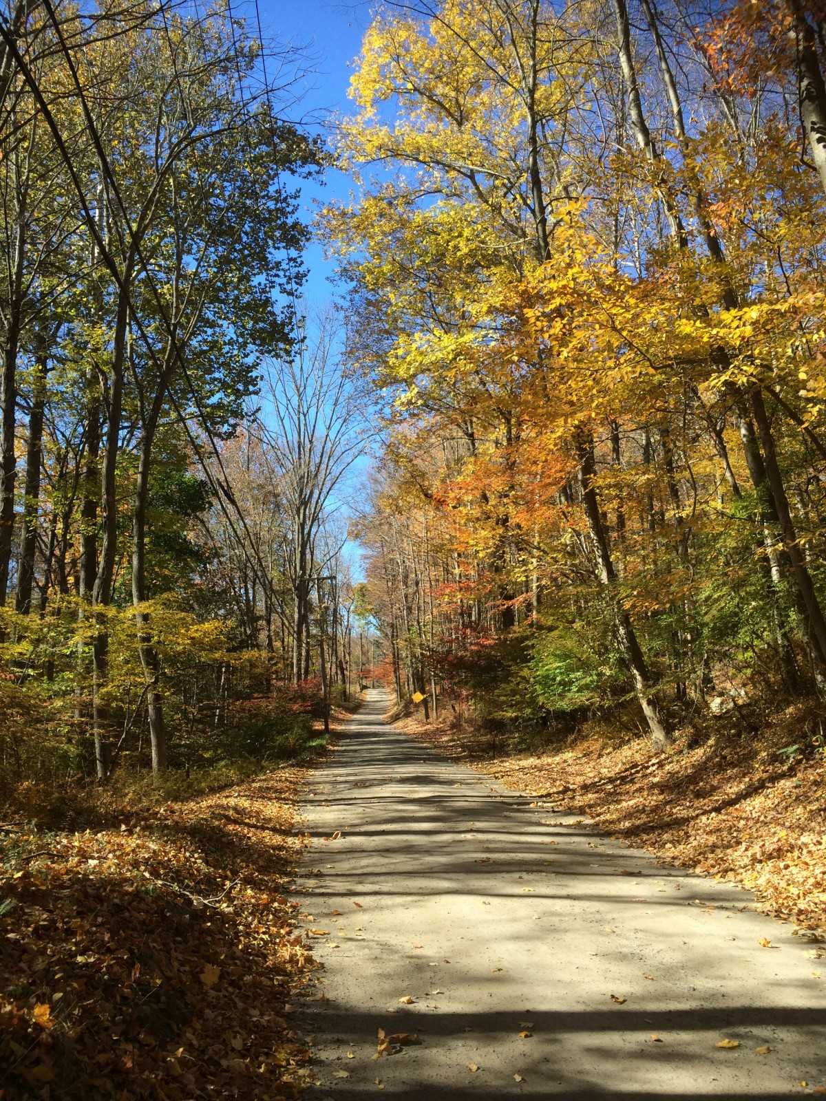 New England Fall Foliage Wallpaper Free Images Landscape Tree Nature Forest Path