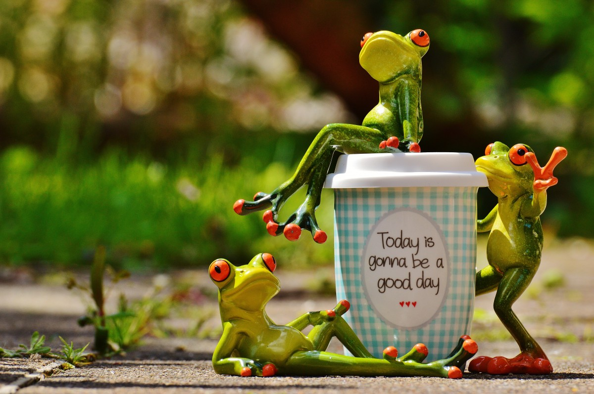 Funny Frog Wallpaper Quotes And Pictures Free Images Coffee Play Sweet Cute Cup Frog