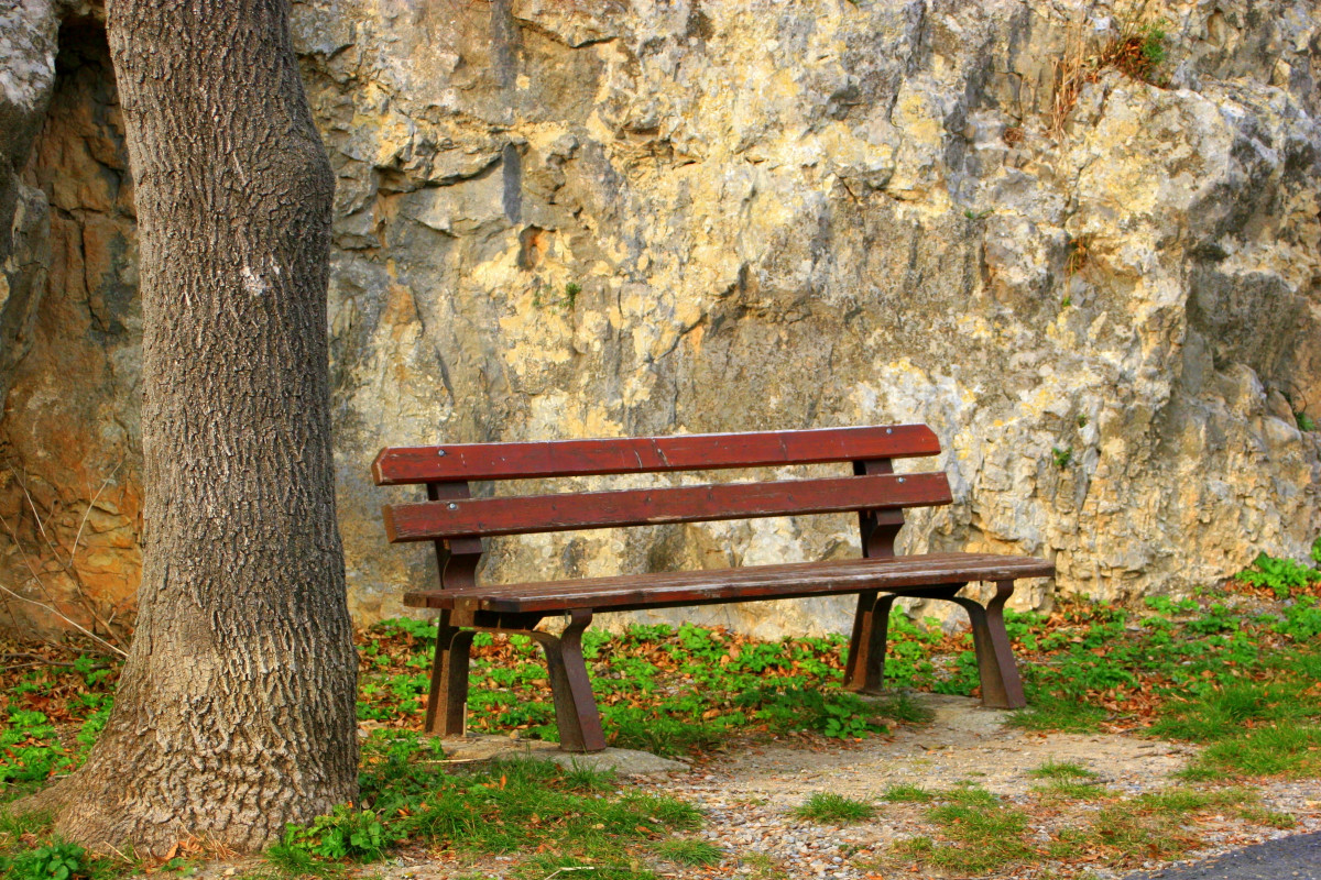 Alone Quotes Wallpaper Free Download Free Images Tree Outdoor Wood Bench Trunk Alone