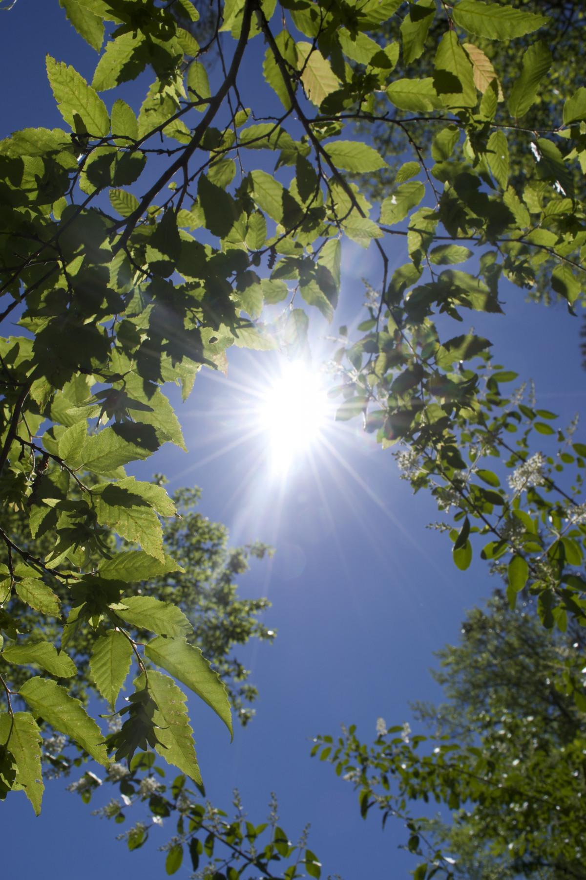 Fall Season Wallpaper Free Free Images Landscape Tree Forest Plant Sky Lane