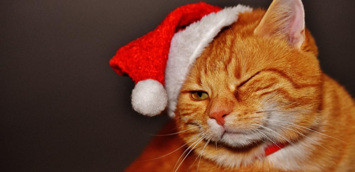 Cat Cute Wallpaper Download Free Images Sweet Cute Pet Fur Kitten Christmas