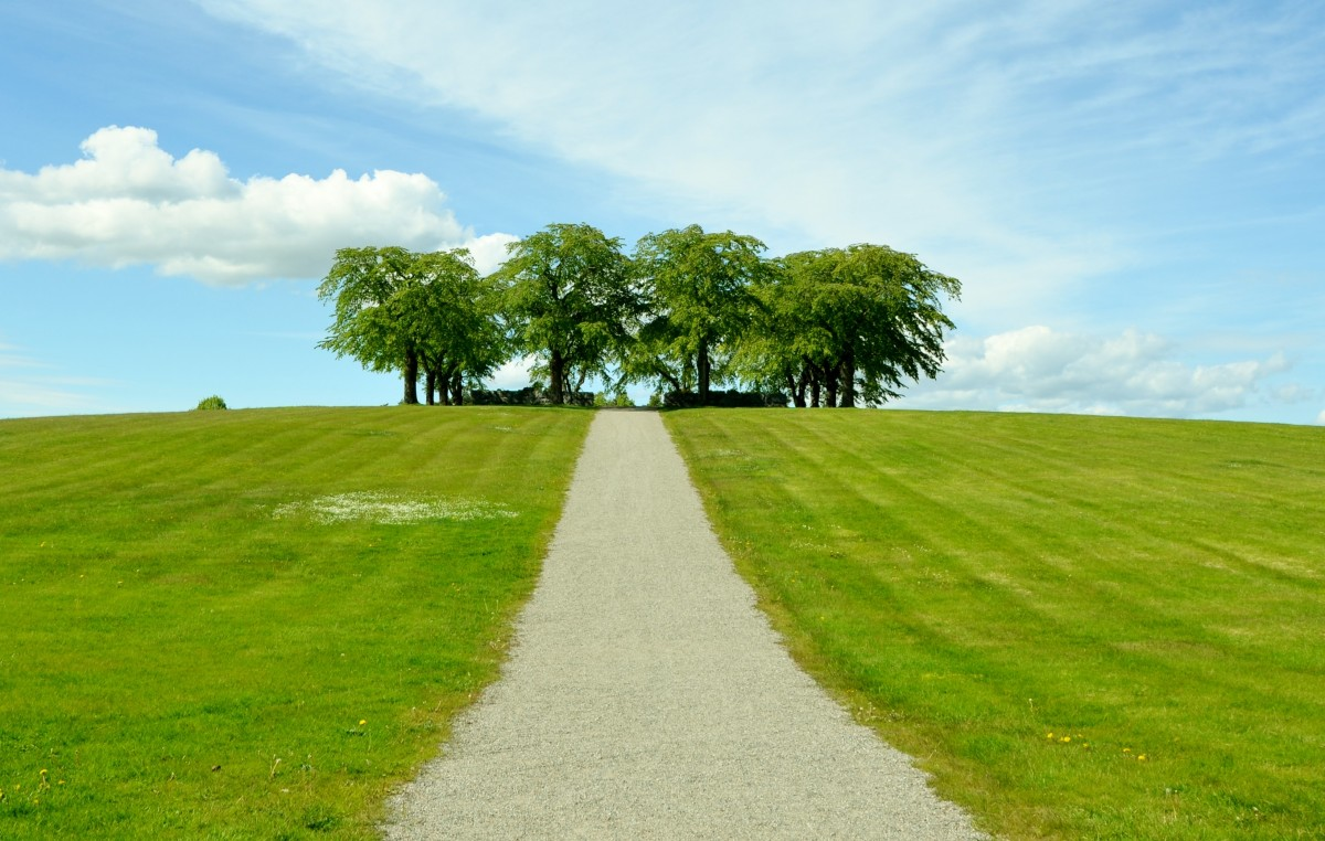 Hd Wallpaper Natur รูปภาพ ภูมิประเทศ ต้นไม้ ขอบฟ้า เบา ปลูก ท้องฟ้า