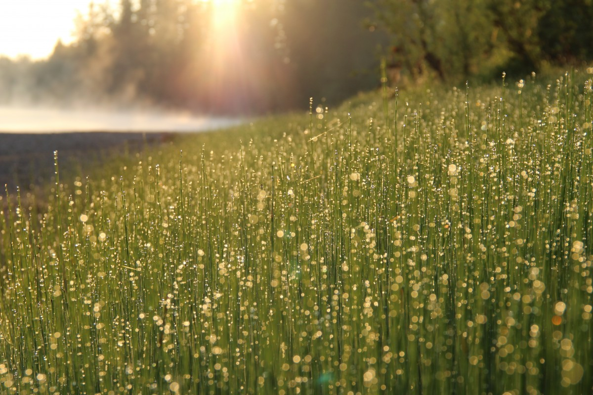 Natural Hd Wallpaper Download For Android Free Images Nature Horizon Blossom Dew Light Cloud