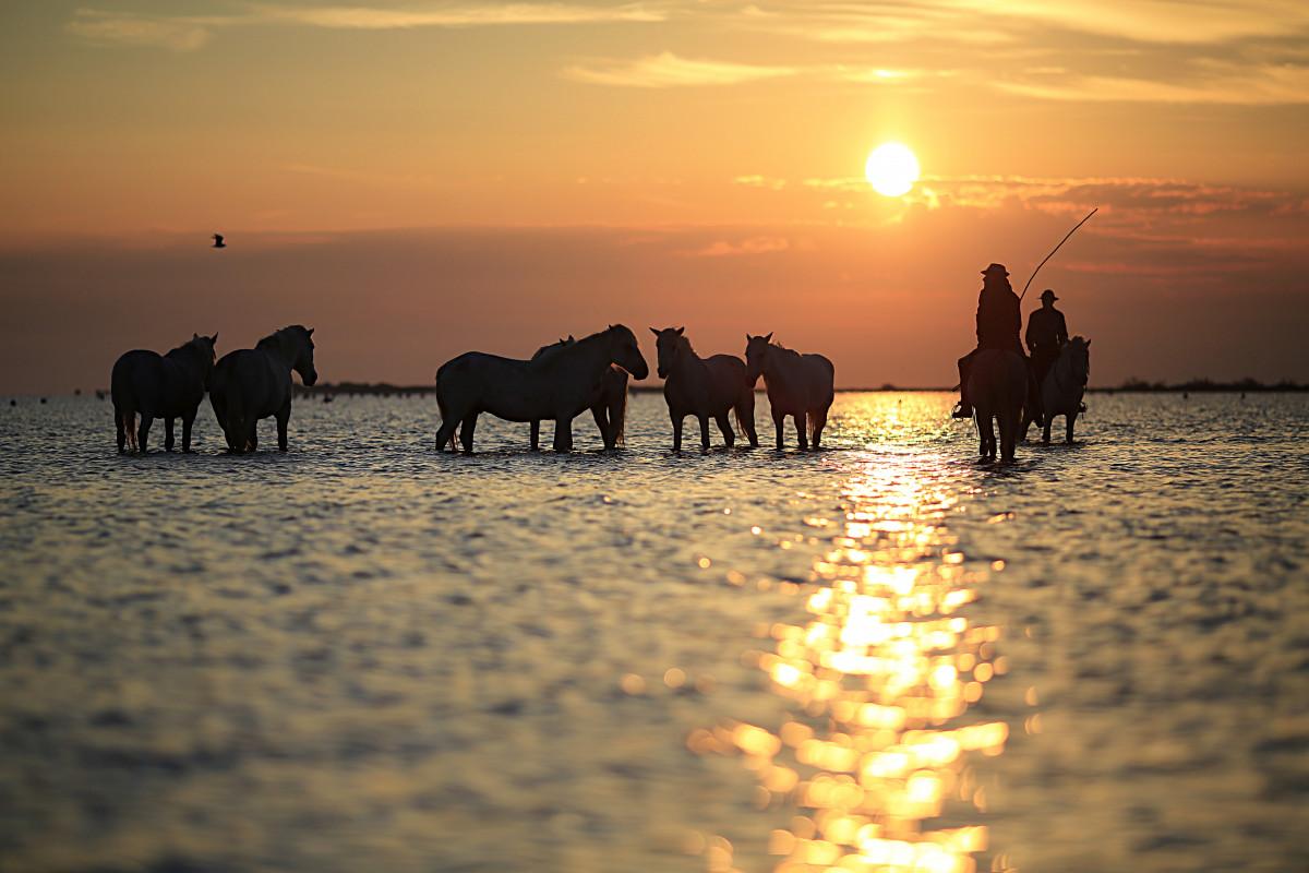 Free Animal Wallpaper Download Free Images Silhouette Sunrise Sunset Morning Dawn