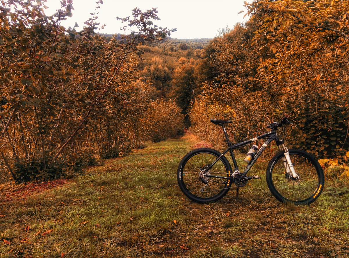 Fall Nature Wallpaper Free Free Images Forest Trail Bicycle Vehicle Soil