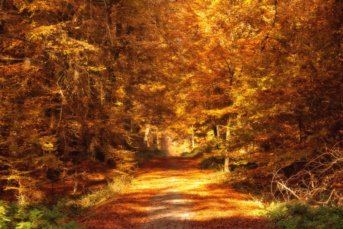 Fall Season Wallpaper Free Free Images Landscape Tree Branch Hiking Sunlight