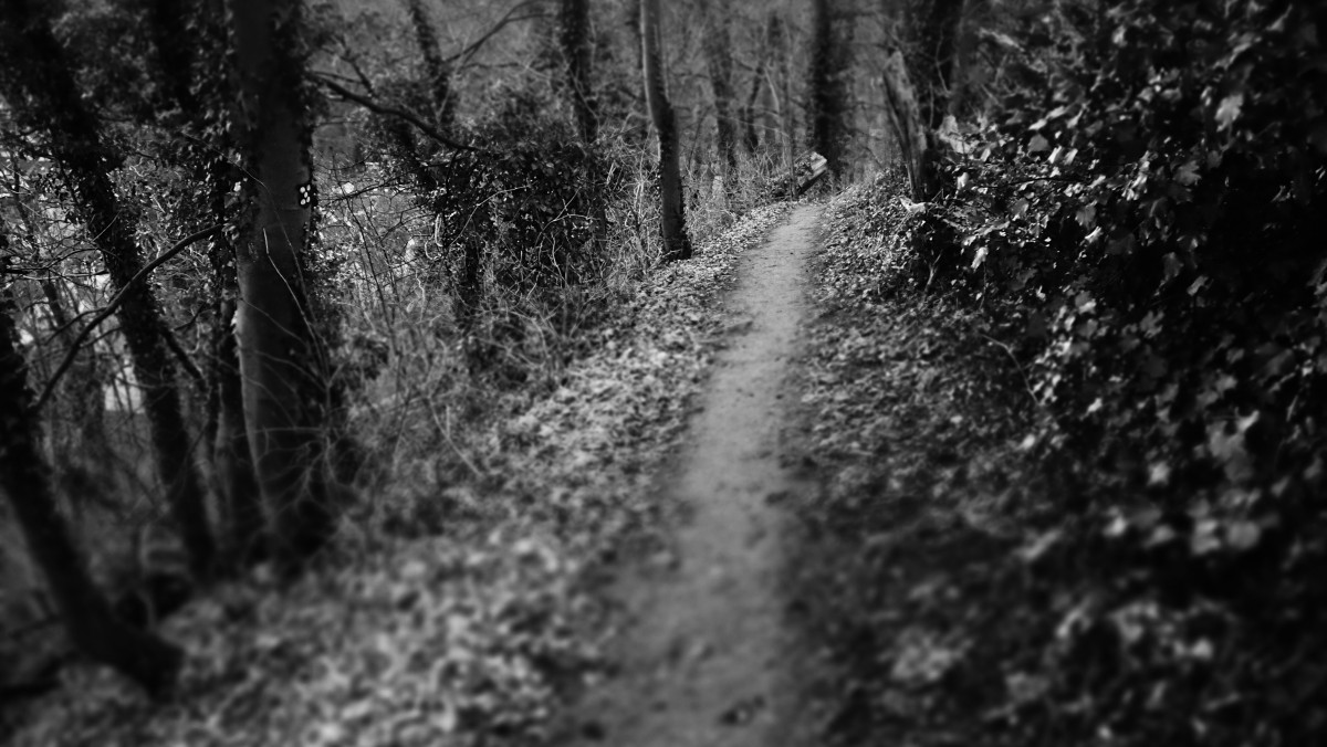 Horror Animated Wallpapers For Pc Free Images Tree Nature Branch Black And White