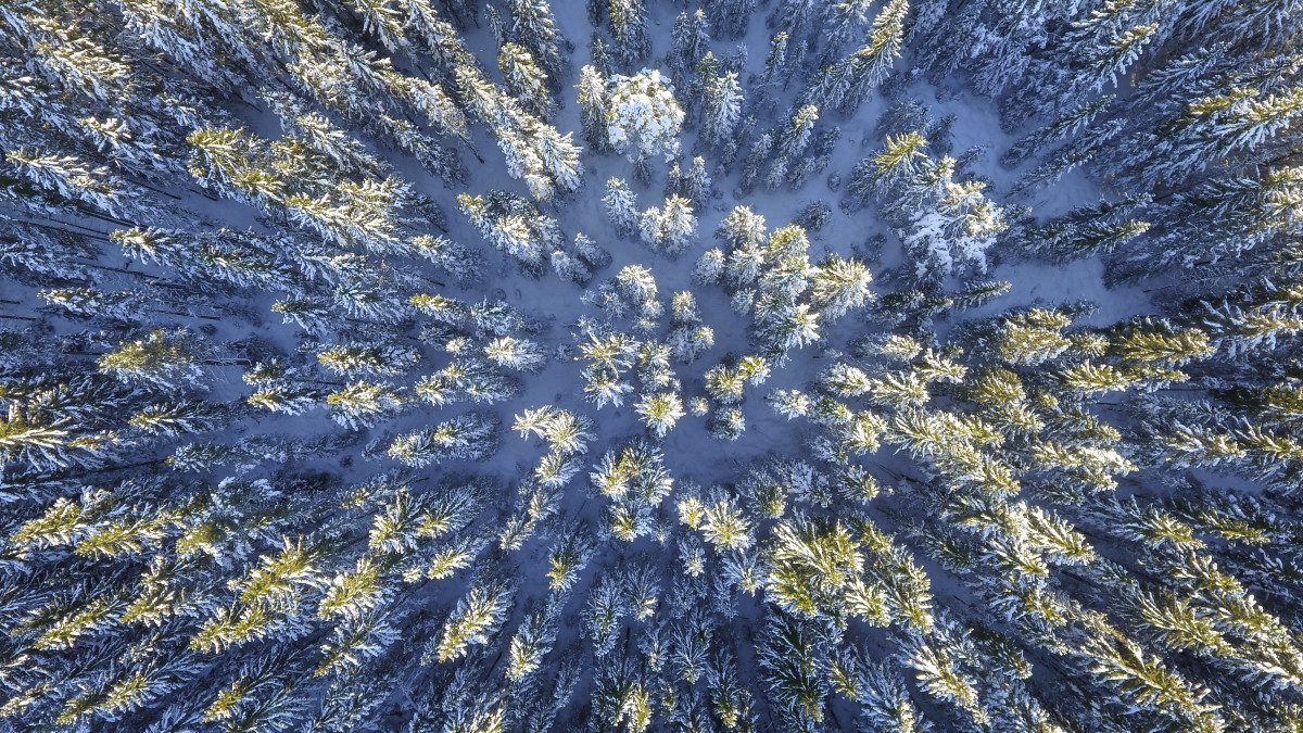 winter snow evergreen cold nature